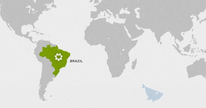 Olá, Brasil!